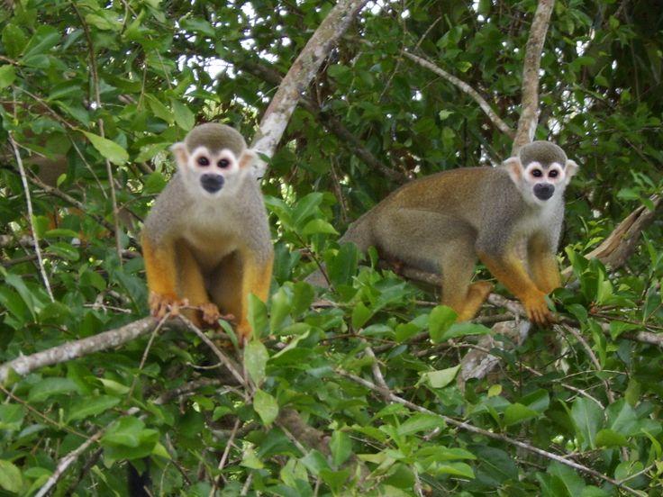 Suriname. Brownsberg Nature Park.