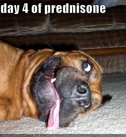 neck swelling from prednisone