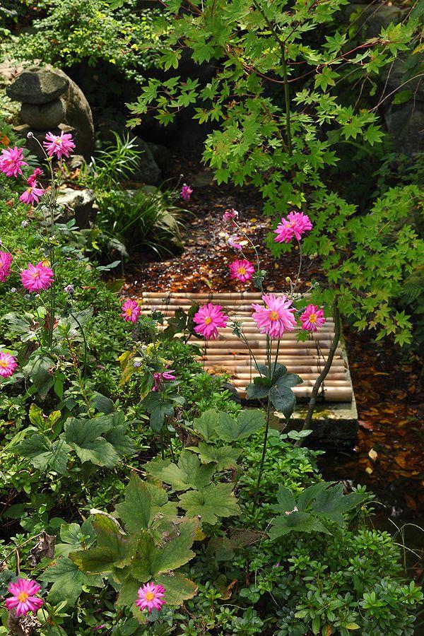 Japanese Garden. Japanese GardensTerrariumBambooBackyard