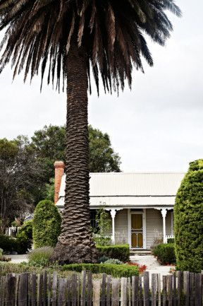 A date palm towers over the 140-year-old weatherboard cottage. Dean Homicki built the paling fences using offcuts from the local mill and replanted much of the garden in its original layout. Photography Sharyn Cairns, styling Indianna Foord