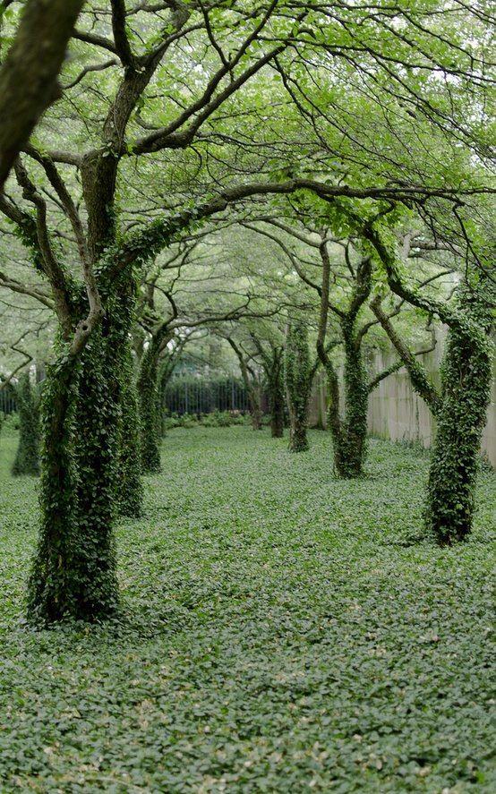 brečtan by vrastal do stromov a ťahal by sa po múre a aj dlažbe
