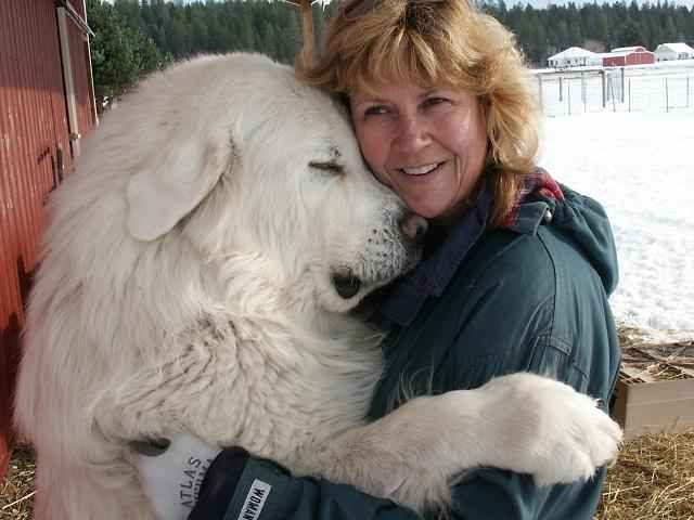 What kind of dog is that?: Big Hug, Animals, Sweet, Great Pyrenees, Pet, Friend, Big Dogs