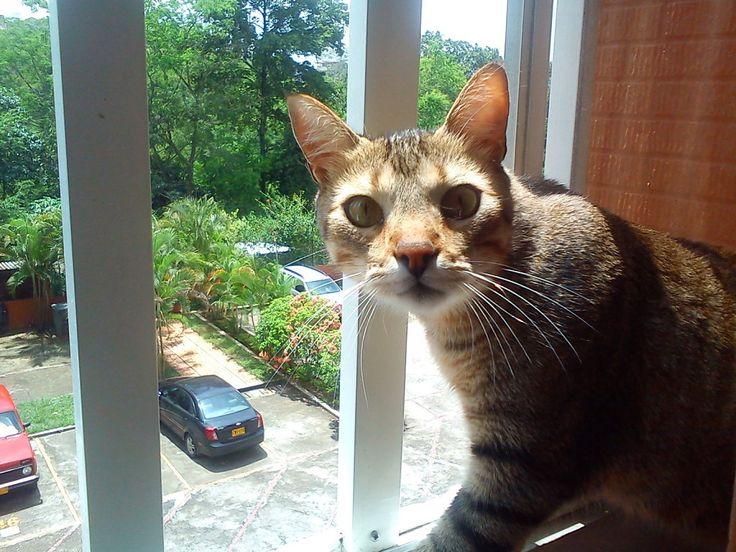 Gato en la ventana | martha-marthica