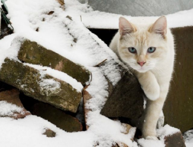 Snowman Cat Family | Snow sculptures, Snowman, Beautiful ...  |Winter Scenes With Cats