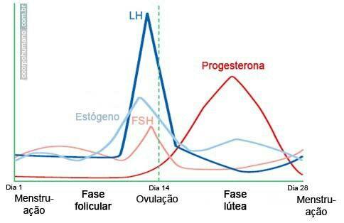 En esta gráfica se observa la variación en los niveles hormonales durante las etapas del ciclo menstrual. También se aprecia como la elevación de ciertas hormonas influye en cambios importantes durante el ciclo.