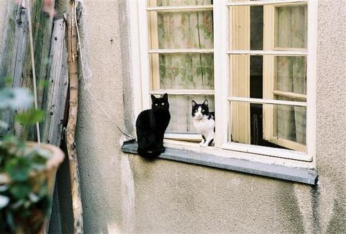 .: Doors, Photos, Cat Charisma, Window Shopping, Photo Sharing, Windows, Window Cats, Cats Our Neighborhood, Cat Lady