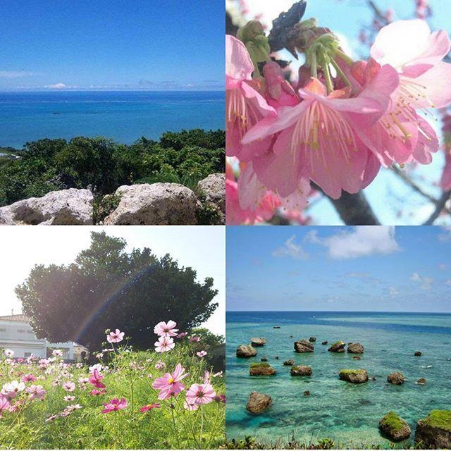 【minaco_k_g】さんのInstagramをピンしています。 《HAPPY NEW YEAR! #2017 #happynewyear #okinawa #japan #sky #sea #cherryblossom #cosmos #rainbow #bluesky #bluesea #okinawajapan #okinawalife #あけましておめでとう #沖縄 #日本 #海 #海好きな人と繋がりたい #空 #空好きな人と繋がりたい #青い海 #青い空 #桜 #コスモス畑 #スマホ撮り #カコソラ #はっぴーにゅーいやー》