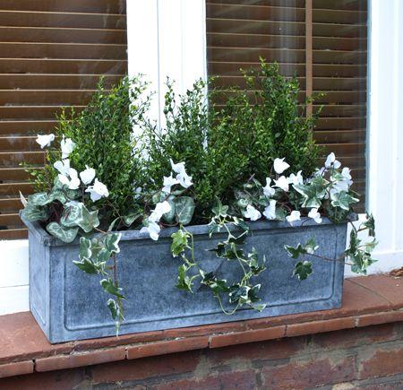 Plant a Winter Window Box
