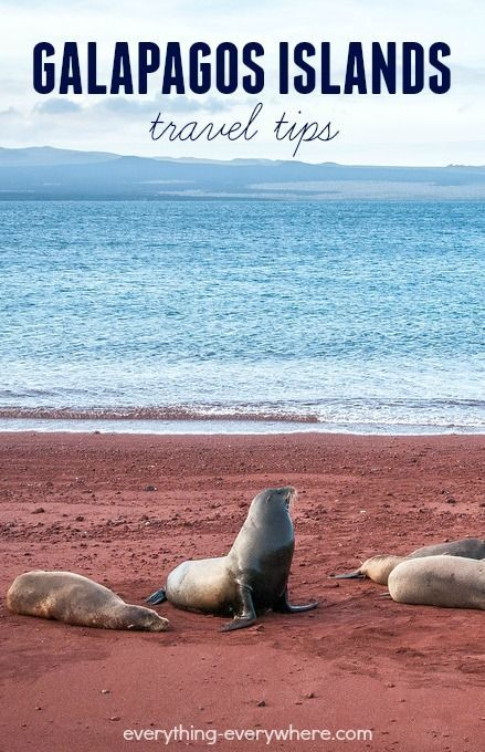 Useful travel tips for the Galapagos Islands. Read this before you go!