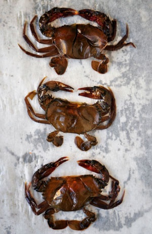 It's softshell crab season! Here are 5 recipes for serving up flavorful crab dishes in late spring.
