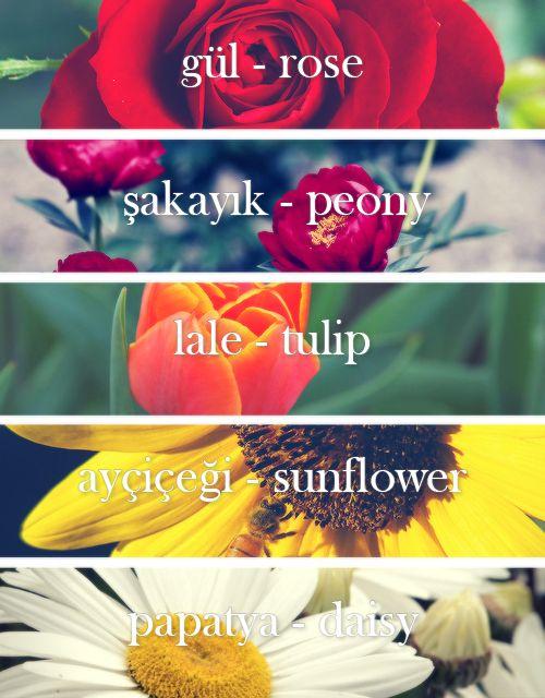 Flowers in Turkish (çiçekler)