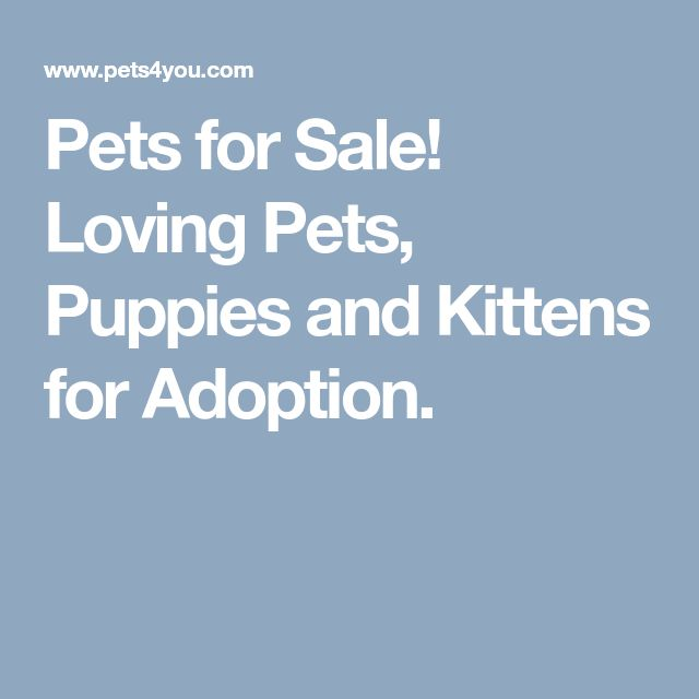 Pets for Sale! Loving Pets, Puppies and Kittens for Adoption.
