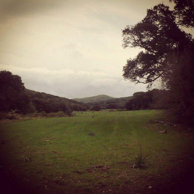 #corse #corsica #green #nature #instanature #wild #beauty #trees #garden #distesa #orizzonte #mountain #grass #prato #spring #instaspring #novellaorchidea #novella #orchidea #raccontierotici #racconti #ebook #ricardo #tronconi #eroticnovel
