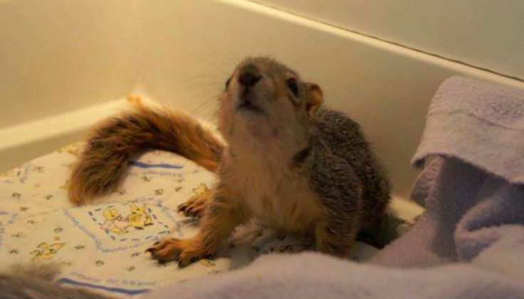 Watch the Amazing Transformation of This Rescued Orphan Squirrel (VIDEO)