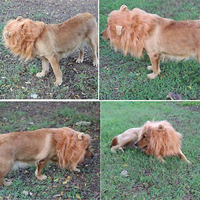Lion Mane Dog Costumes Wig Hair Cosplay With Ears and Tail For Mediun Large Pets