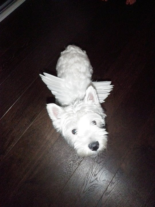 Our angel dog Bella <3