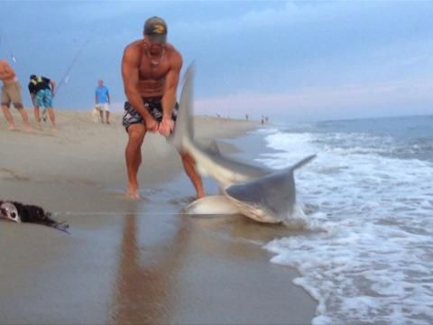 Bestvacationsinus not 7 foot shark on the beach for Shark fishing myrtle beach