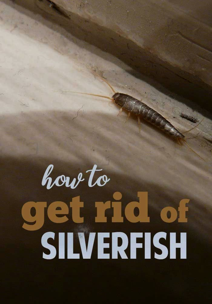 d93c057711523040ffaddace9e021875 - How To Get Rid Of Silverfish In House Uk