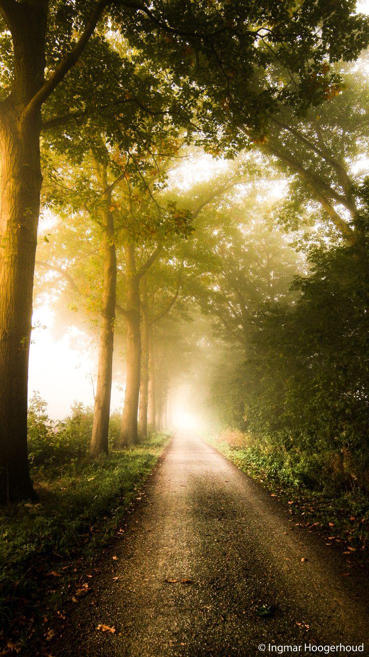 Photo Dream Path by Ingmar Hoogerhoud on 500px