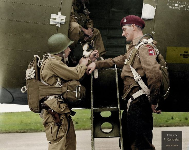 During a stop in Iceland on route to England, the men of the 2nd Battalion, 503rd Parachute Infantry, found and rescued a puppy who they named Smokey.