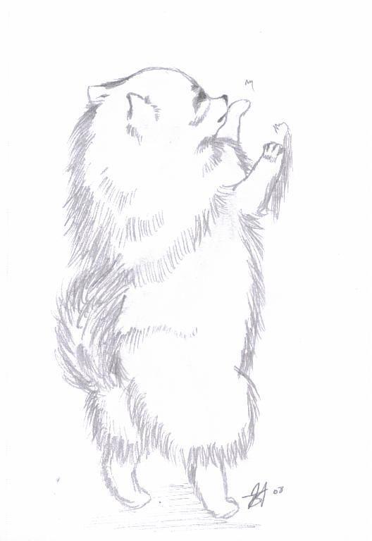 Pomeranian by Shadowkero