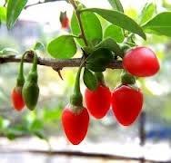 Goji Berry και Διατροφή