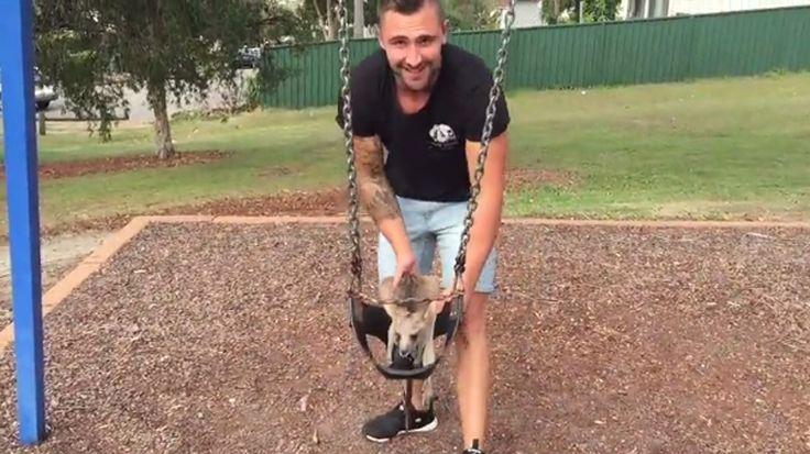Sosyal medya fenomenleri farklı alanlarda kendilerine dikkat çekerek takipçi toplarken Avustralyalı komedyen Jackson O'Dohetry ise kangurusuyla eğlenceli anlarını paylaşarak daha fazla insana ulaştı. Detaylar ajanimo.com'da.. #ajanimo #ajanbrian #hayvan #animal #kanguru #instagram