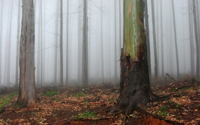 Creative Escapes Hogsback forest