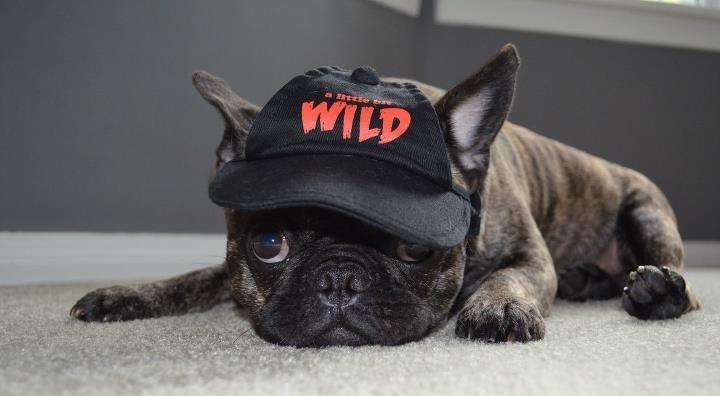 Adopt Me Pet Names