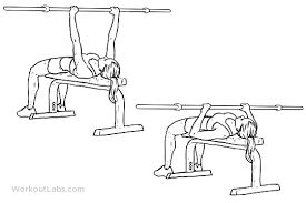 barbell flat bench press 3 sets of 5 to 8