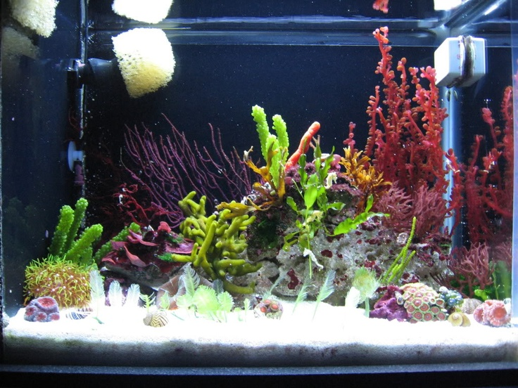 388 best images about reefkeeping on pinterest aquarium for Seahorse fish tank