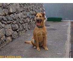 GUINDA PARA ADOPTAR VALLE COLINO ℹ   Tiene 2 años y 11 meses se recogió en la calle lleva más de un año en el Albergue esperando un hogar.... Más información en:Teléfono: 673.895.015   #Adopción  Contacto y Info: Pulsar la foto o aquí: https://leales.org/animales-en-adopcion/perros-en-adopcion/guinda-para-adoptar-valle-colino_i1453    Acerca de esta publicación:   Esta publicación NO ha sido creada por Leales.org y NO somos responsables de su contenido.  Ha sido publicada gratuitamente por…