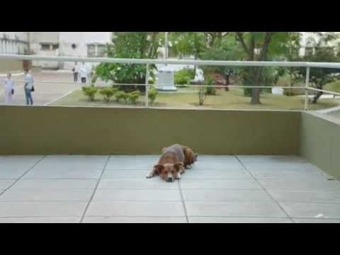 "FUNDACION ARGENTINA DE TRASPLANTE HEPATICO ""The Man and the Dog"" - YouTube"