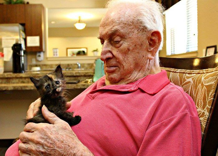 Старики из дома престарелых ухаживают за котятами / Питомцы