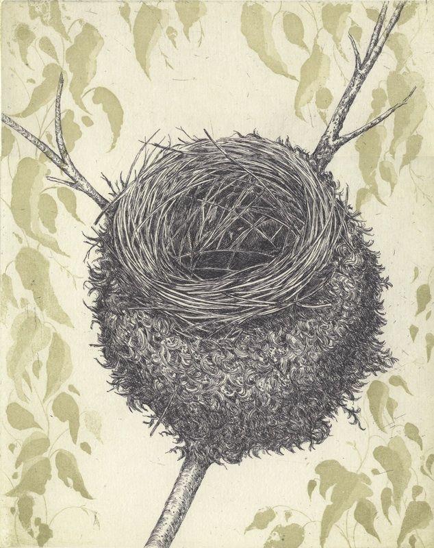 Black Faced Monarch nest etching Artist Sandi Rigby