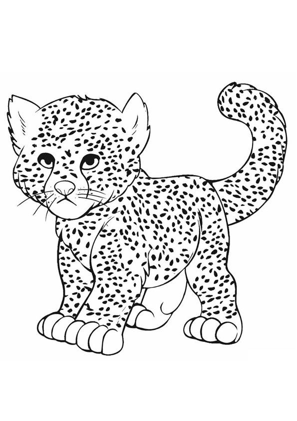 Baby Cheetah Playing Coloring Pages Coloring Pages Baby Cheetahs Cheetah Party