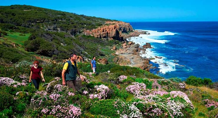 Hiking amongst Spring wildflowers on the Cape to Cape Track