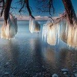 Frozen Trees on the Shores of Lake Ontario