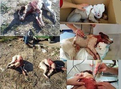 Pétition · Investiguen y encuentren al autor de esta masacre contra un animal inocente · Change.org