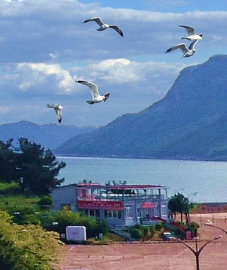 Amasra Büyük Liman Canlı Balık Lokantası