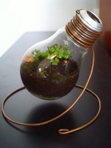 light_bulb_terrarium2