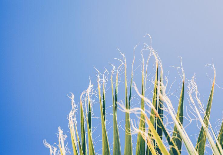 Benvenuti nel cuore di IATITAI 🌱 La naturale purezza degli ingredienti e millenari metodi di cura sono ispirazione per la nostra fresca gamma di cosmetici vegetali e di prodotti per la cura del corpo. Ogni preparato è individuale e viene lavorato a mano per nutrire il corpo ristabilendo bellezza ed equilibrio.