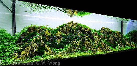 Aquascaping Floating Island Google Search Aquascape Penjing Terrarium Pinterest Google
