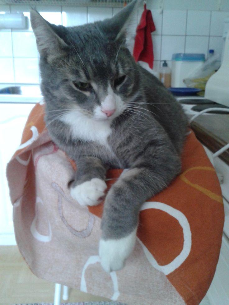 Piti silittää paita, mutta pitikin silittää kissaa