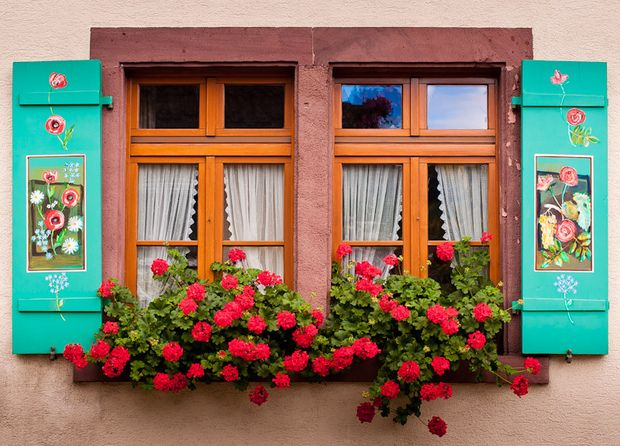 Flores na janela!     Quem nunca quis ter rosas perfumando o quarto logo pela manhã?!