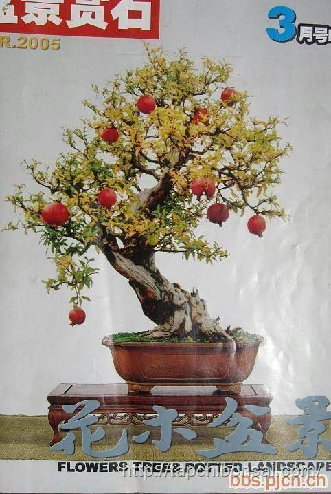 1000+ Images About Bonsai Fruit On Pinterest