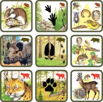 игра по теме животные леса