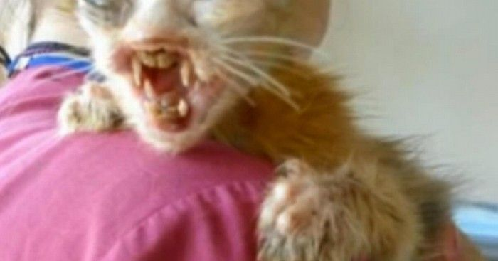 Une fillette de 7 ans sauve un chat défiguré. Émouvant !