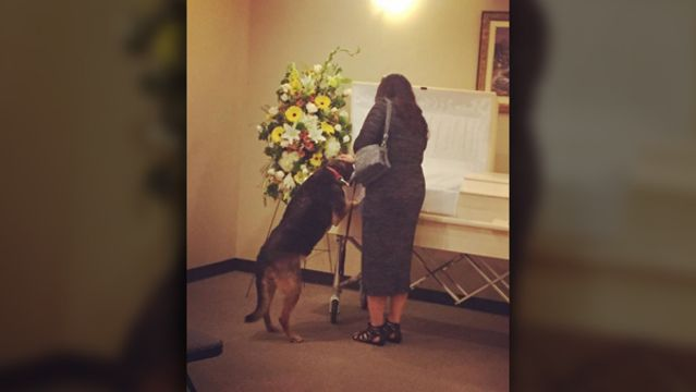 Dog Visits Funeral Home For Last Good Bye To Beloved Owner Funeral Home Funeral Beloved