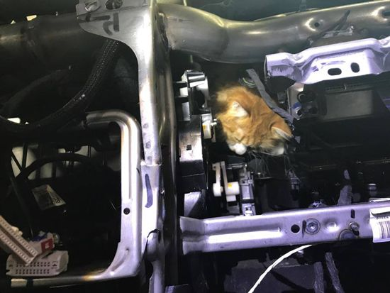 We all know the old cliché about calling the fire department when a cat is stuck in a tree. Well, who does the fire department call about a cat stuck – in a car? In the case of the Albany Fire Department in Oregon, they called a local mechanic!